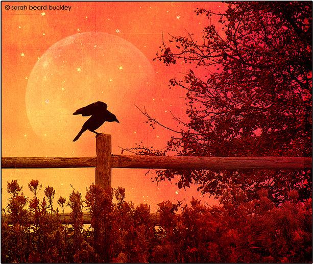 A Halloween Moon - A Black Crow Silhouette