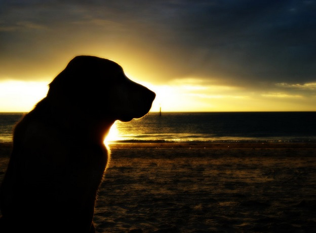 50 Most Incredible Examples Of Silhouette Photography