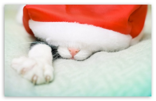 santa_cat wallpaper
