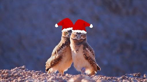 Christmas Tree Owls