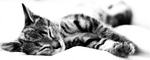 sleeping cat wallpaper for mac